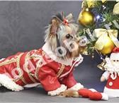 Фотография в Домашние животные Услуги для животных Если вы заботитесь о красоте и здоровье своего в Химки 0