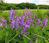 Фото в Домашние животные Растения ООО «КУБАНЬ АГРО» предлагает к реализации в Краснодаре 45