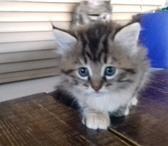 Фото в Домашние животные Отдам даром Только в добрые руки: Два премилых котенка, в Челябинске 100
