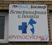 """Фото в Домашние животные Услуги для животных За время работы ветеринарной клиники """"Добрый в Москве 500"""