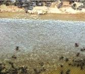 Фото в Красота и здоровье Товары для здоровья КУПИТЬ МЕД В ЧЕБОКСАРАХДомашний мед - Частная в Чебоксарах 1500