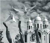 Фотография в Домашние животные Птички Белые голуби на любые праздники,пара 1000р,желательно в Казани 1000