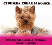 Foto в Домашние животные Стрижка собак уважаемые владельцы! хочу предложить вам в Нижнем Тагиле 1200