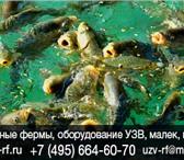 Фото в Хобби и увлечения Рыбалка Расчет УЗВ домашней мини фермы под ключ. в Москве 1590000