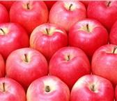 Изображение в Прочее,  разное Разное продам яблоки в Нальчике 30