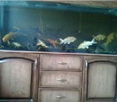Изображение в Домашние животные Рыбки продам аквариумы 300л и 500л с оборудованием, в Краснодаре 0