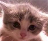 Фотография в Домашние животные Отдам даром Отдадим котят возрастом в 1 месяц в добрые в Магнитогорске 0