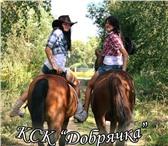 Фотография в Развлечения и досуг Спортивные мероприятия Все кто хочет научиться ездить на лошади в Москве 3000