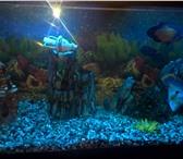 Фото в Домашние животные Рыбки Продается аквариум на 500 литров с тумбой в Москве 40000