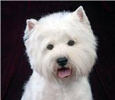 Фотография в Домашние животные Стрижка собак Стрижка собак, тримминг собак, стрижка кошек в Лобня 990