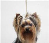 Изображение в Домашние животные Услуги для животных Вид услуги: Уход за животнымиВам нужна стрижка в Тюмени 500
