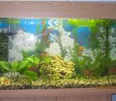 Изображение в Домашние животные Рыбки Продам аквариум объем 140 литров на тумбе, в Красноярске 6000