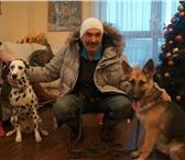 Изображение в Домашние животные Услуги для животных Дрессировка собак.Коррекция нежелательного в Казани 0
