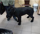 Foto в Домашние животные Стрижка собак Предлагаю услуги груминга для собак: Йоркширский в Котельники 1000