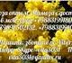 Мимоза оптом (из Адлера и Абхазии)Постав