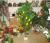 Изображение в Домашние животные Растения иск.плодовые деревья(яблоко,лимон,гранат)175-180см.опт.1800р-лимон,яблоко.1950-гранат. в Москве 2200