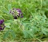 Foto в Домашние животные Растения ООО «КУБАНЬ АГРО» предлагает к реализации:Семена в Краснодаре 190