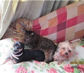 Фото в Домашние животные Услуги для животных Предлагаем Вам Домашнюю передержку собак в Москве 350