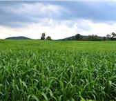 Foto в Домашние животные Растения ООО «КУБАНЬ АГРО» предлагает к реализации:Семена в Краснодаре 50