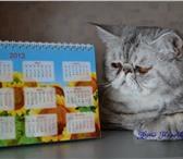 Изображение в Домашние животные Вязка Шикарный экзотический короткошерстный кот в Тольятти 1