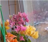 Фотография в Хобби и увлечения Разное Продам укорененные черенки (250р), неукорененные в Магнитогорске 150