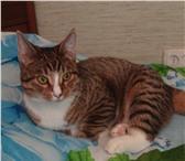 Изображение в Домашние животные Вязка Молодой и энергичный котик приглашает кошечку в Челябинске 0