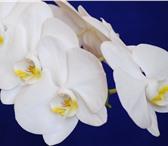 Фотография в Домашние животные Растения Продам адаптированые комнатные растения : в Братске 100