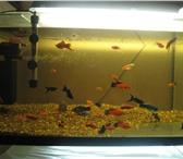 Фотография в Домашние животные Рыбки изготовим аквариумы по вашим размерам  ! в Стерлитамаке 500