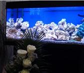 Фотография в Домашние животные Рыбки аквариум 180 литров с биофильтром.со всем в Красноярске 40000