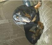 Фотография в Домашние животные Найденные Найдена такса, мальчик!черного цвета. В районе в Братске 0