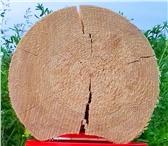 Foto в Строительство и ремонт Отделочные материалы Реализуем шпаклевку по дереву SMEs для заполнения в Балашихе 175