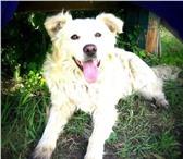 Фотография в Домашние животные Отдам даром Срочно нужен дом / передержка белому мишке в Челябинске 300