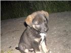 ЖИВОТНЫЕ И РАСТЕНИЯ в Тайшете: купить щенка