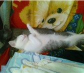 Foto в ? Отдам даром-приму в дар Два симпатичных, игривых котенка: Роза и в Пензе 0