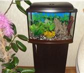 Foto в Домашние животные Товары для животных Продам аквариум, 53л, с подсветкой, на спец.тумбочке в Пскове 5000