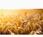 Фотография в Домашние животные Растения ООО «КУБАНЬ АГРО» предлагает к реализации:Семена в Краснодаре 0