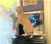 Фотография в Домашние животные Услуги для животных Возьмем на передержку Вашего кота. Индивидуальные в Москве 300