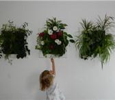 Фотография в Домашние животные Растения • Фитокартины Flowall из Европы• Встроенная в Санкт-Петербурге 6500