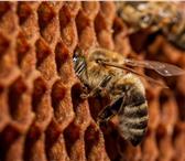 Foto в Домашние животные Другие животные Пчеловодное хозяйство Толмачева реализует в Чите 3200