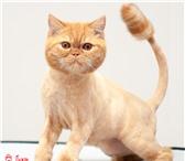 Изображение в Домашние животные Услуги для животных Студия груминга Пижон предлагает стрижку, в Хабаровске 0