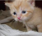 Изображение в Домашние животные Отдам даром Два пушистых котенка, обе девочки, ищут хозяев. в Череповецке 0