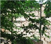 Изображение в Отдых и путешествия Пансионаты В с.Береговое Бахчисарайского района в экологически в Ростове-на-Дону 850