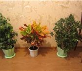 Фото в Домашние животные Растения ИНТЕРЬЕРНЫЕ РАСТЕНИЯ, ДЛЯ КВАРТИР И ОФИСОВ.Растения в Магнитогорске 5000