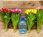 Foto в Домашние животные Растения Предлагаем тюльпаны оптом Экстра класса к в Красноярске 29