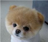 Фото в Домашние животные Стрижка собак Опытный парикмахер приедет к вам на дом в в Москве 1000