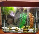 Foto в Домашние животные Рыбки Изготовление аквариумов и крышек!Доставка, в Белорецке 10