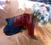 Foto в Домашние животные Товары для животных Интернет магазин одежды для собак Алефтинка в Владимире 800