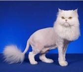Фото в Домашние животные Услуги для животных Грумер-стилист. В стоимость стрижки входят в Пензе 500