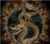 Фото в Развлечения и досуг Ночные клубы «Золотой Дракон»- территория, где можно в в Калининграде 0