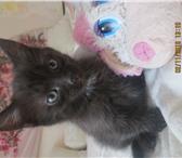 Фото в Домашние животные Отдам даром Отдадим маленького котенка в добрые руки. в Санкт-Петербурге 1